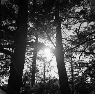 lubitel_sun_trees